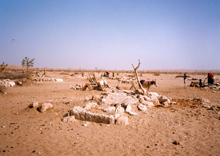 drought in thar In the second of our two-part series from pakistan's thar desert, we focus on the nutrition component of our integrated programme which is tackling the devastating effects of recurrent drought in the region.