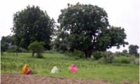 agricultural-land-9